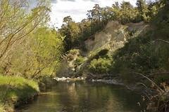 Grey River,Canterbury foothills, New Zealand (Steve Attwood) Tags: newzealand green forest canon river landscape bush canterbury beech beechtrees beechforest mtgrey