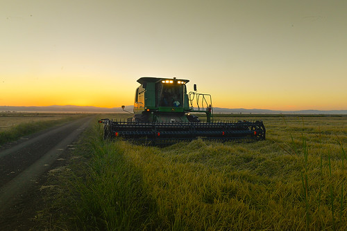 Slideshow of the California Rice Harvest in the Sacramento Valley