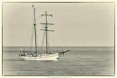 Flying Dutchman (robvanderwaal) Tags: sea netherlands sailing ship ships nederland vessel zee flyingdutchman sailingship schip schepen 2013 robvanderwaalphotographycom