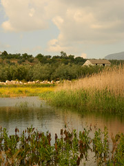 Laguna de San Cristbal (JRuizArana) Tags: espaa primavera atardecer spring andaluca spain ruins campo olivos cabra cortijo lucena abandonado olivar olvidado subbtica