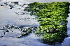 (alexandreabecassis) Tags: ile de r france french poitou charente algues plage sand sable roc roche mousse beach
