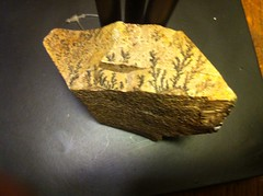05-Gologie (jade-jade2) Tags: plante mont egypte roche moise fossile geologie iphon lumierte