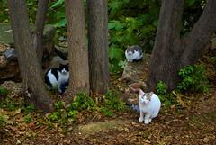 Modelos callejeros. (Pablo Calavia Gal) Tags: naturaleza rio pentax ciudad gatos zaragoza urbano silvestre niebla callejero salvaje canodromo k200d