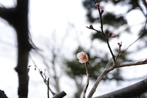 20130222 Iga-Ueno 4