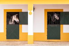 Cavalo Lusitano - Golegã, No. 2 (Canadapt) Tags: horses portugal graphics geometry symmetry stable lusitano golegã golga canadapt