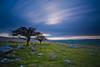 Combestone Tor, Dartmoor (eye pad) Tags: longexposure trees sunset canon devon le windswept barren dartmoor 1740f4l combestonetor 5dmk3 lee09ndgrad leebigstopper
