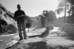 Joshua Tree National Park, California - January 2015 (36mmatatime) Tags: blackandwhite film analog 35mm photography nationalpark desert joshuatree ilford roadrunner av1