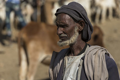 KRN-104 Man Selling Cattle At The Monday Market, Keren (FO Travel) Tags: africa catholic cattle market muslim islam kultur culture christian mercado camel ganado afrika tradition markt mercato march cultura camello kamel keren customs cristiana eritrea afrique chrtien katholisch tradicin costumi chameau cattolica musulman catlica vieh frica  catholique  tradizione christlich musulmn musulmano   cammelli bestiame muslimisch btail      rythre  anseba