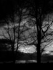 _NIK1073 (nikdanna) Tags: morning trees blackandwhite sun nature alberi clouds forest nuvole natura sole bianconero bosco mattino interno7 nikdanna