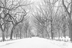 _MG_5302-2 (rebeccaplotnick) Tags: park new york city nyc white snow black rebecca walk central poets parrk plotnick