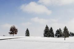 Snowy Hills - Lexington (mikemcnary) Tags: winter sky snow cold tree ice clouds landscape outdoors frozen day unitedstates snowy lexington kentucky hill jacobsonpark