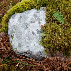 How to decorate a rock (Michael Foley Photography) Tags: wood trees ireland winter forest moss oak flora holly killarney lichen birch cokerry tomies