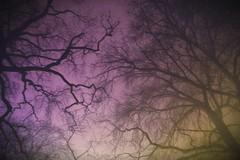 The night sky (PattyK.) Tags: trees winter night hellas lookingup greece nightsky whereilive myphotos ilovephotography 2015 ioannina giannena epirus