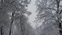 It Snowed The Other Day (michael.veltman) Tags: trees snow illinois lockport