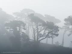 Morning Fog 01 (Mark Zaig) Tags: morning trees mist silhouette fog grey shadows olympus em1 m43 microfourthirds 40140mmf28