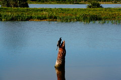 RESTING SPOT (R. D. SMITH) Tags: bird nature water outside one secluded canoncamera rebelxsi