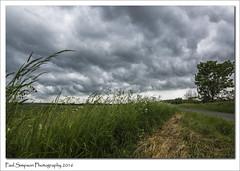 Stormy Sky (Paul Simpson Photography) Tags: england sky cloud storm tree nature grass lincolnshire graysky greysky stormyweather summerstorm cloudyweather photosof imageof greycloud graycloud photoof imagesof sonya77 paulsimpsonphotography june2016