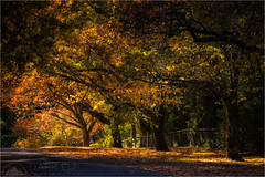 Colours of the Fall (Darkelf Photography) Tags: blue autumn trees sunlight mountains fall nature leaves canon landscape photography colours australia mount filter nsw newsouthwales wilson maciek 70200mm 2016 polariser darkelf gornisiewicz 5diii