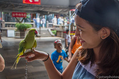 Birds and Lin @ Longshan Temple (TSE_J) Tags: park travel sun elephant hot museum modern temple photography memorial asia dr district hill taiwan toilet palace national springs temples taipei taipei101 xiangshan longshan geological yehliu beitou jiufen yatsen nangang yamingshan
