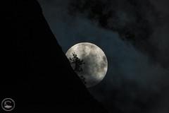 Against All Odds (www.35mmNegative.com(On a Break, Catchin) Tags: park new tree night landscape photography cloudy nps hill may parks fullmoon national valley yosemite area services sfbay 2016 hazarika astrometrydotnet:status=failed www35mmnegativecom reetom astrometrydotnet:id=nova1563337