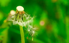 Nature macro (Yasmine Hens) Tags: plant flower macro green fleur plante europa flickr belgium ngc vert blanc namur hens yasmine wallonie iamflickr flickrunitedaward hensyasmine
