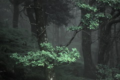Misty Mountain (Cal Killikelly) Tags: park wood trees summer cloud mist mountain green wales forest national snowdonia greeneden