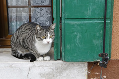 Burano Cat (ramislevy) Tags: venice italy house color architecture cat island shutter burano venetianlagoon
