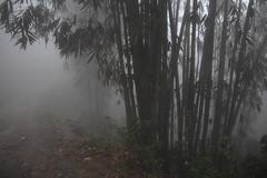 Sa Pa 13 (gsamie) Tags: winter mist color rain fog canon vietnam sapa hmong bamboos t3i 600d gsamie guillaumesamie