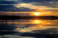 duck pond (hollandgs) Tags: lake golden duck