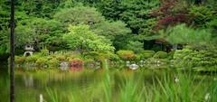 (nobuflickr) Tags: flower nature japan cherry kyoto   freshgreen   heianjingushrine 20160609dsc02097