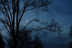 moon cloud tree house (fdfotografie) Tags: silhouette abend mond flora outdoor pflanze himmel wolken haus struktur dmmerung blau tageslicht ste morgen baum muster schwarz zweige ausschnitt morgendmmerung mondsichel textur schattenriss mondlicht lichtstimmung d5000 verzeigungen