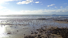 Chroicocephalus novaehollandiae_4 (Tony Markham) Tags: bird waves seagull gull northbeach seabird wollongong illawarra northwollongong silvergull chroicocephalusnovaehollandiae