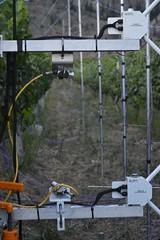 Katabatic flow through vineyard - infrared thermometers (ubcmicromet) Tags: katabaticflow okanagan vineyard temperature turbulence canopy surface infrared thermometer irt ubcgeography ubc geography science climate climatology