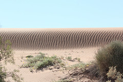 Sand Dune on Birdsville Track (Arthur Chapman) Tags: desert australia outback sanddune southaustralia outbackaustralia birdsvilletrack strzeleckidesert geo:country=australia geocode:accuracy=100meters geocode:accuracy=gps geo:alt=25meters