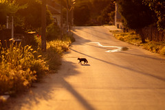 SAM_8900c (Apostol Dragiev) Tags: street sunset cat srem samyang samyang8514