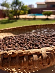 Drying coffee (henriiqueprado) Tags: blur macro apple coffee caf bokeh explore iphonese