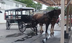 20160624_161948 (joyannmadd) Tags: amish buggy ride intercoursew pennsylvania farm kitchenkettlevillage lancaster pa