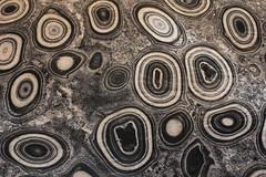 IMG_1416 (www.ilkkajukarainen.fi) Tags: stone kivi museo museum muse museet visit vapriikki tampere suomi finland europa eu scandinavia pallo kangasala pallokivi ballstone graniitti nyte