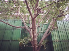 How Green is My City (Mayank Austen Soofi) Tags: city trees green is delhi jungle valley greens how walla my