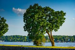DSC06860.jpg (photix1) Tags: ca canada eau rivire qubec arbre parc saintandrdargenteuil saintandrdargenteuil