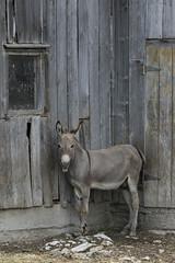 Fifty Shades of Gray (a56jewell) Tags: window barn rocks weekend gray july donkey a56jewell