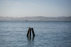 SBezalel-20160528-P5280518 (Photos at SFEI) Tags: sanfrancisco beach water skyline bay waves marin bayarea cormorant sausalito sfbay fortbaker