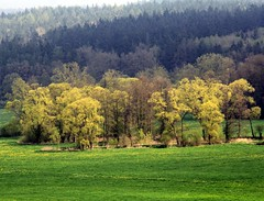 (Linda6769 (OFF)) Tags: tree germany thuringia willowtree conifer harras werravalley