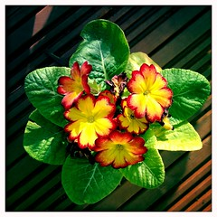 Garden Flowers on the Deck II (billyrosendale) Tags: flowers garden pot gardenflowers potflowers