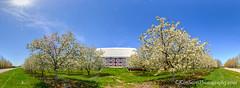 Cherry Orchard ... blossom barn (Ken Scott) Tags: panorama usa barn spring michigan bluesky lakemichigan greatlakes april cherryblossoms sunburst freshwater leelanau 45thparallel 2013 fhdr kenscottphotography kenscottphotographycom