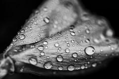Rainy 4th (anzere03) Tags: