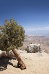 Keys View (DerickCarss) Tags: california park ca usa west tree america coast colorado unitedstates desert joshua national mojave np