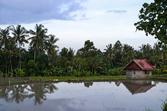 Bali (y.becart) Tags: sky cloud lake green landscape rice lac vert ciel riz terace paysa risiere