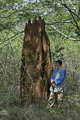 Il fotografo Renato Valterza osserva un termitaio, Renato Valterza photographer watching a termitarium (paolo.gislimberti@gmail.com) Tags: animalarchitecture architetturaanimale