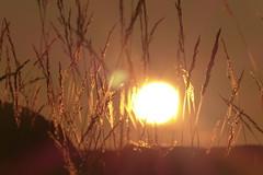 LIGHT (evisdotter) Tags: morning light sun nature grass sunrise sunny solen gräs sooc frameitlevel1